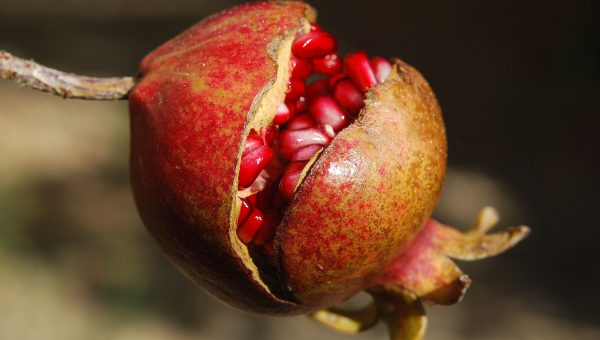 pomegranate-fruit-flower-exotic-65949