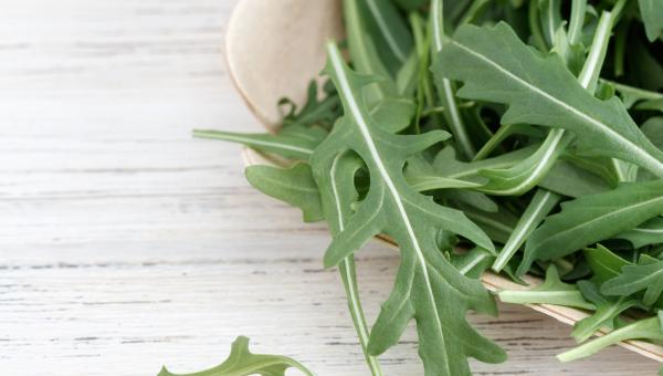 Bunch of rocket salad leaves